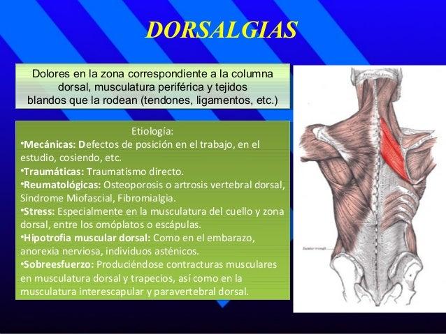 DORSALGIAS Dolores en la zona correspondiente a la columna dorsal, musculatura periférica y tejidos blandos que la rodean ...
