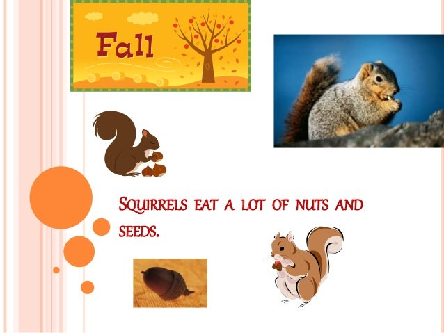 SQUIRRELS EAT A LOT OF NUTS AND SEEDS.