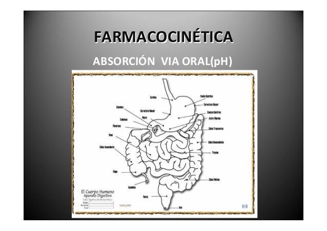 FARMACOCINÉTICA            ABSORCIÓNVIAORAL(pH)El pH gástrico al nacer es neutro (líquido   amniótico). Alcanz...