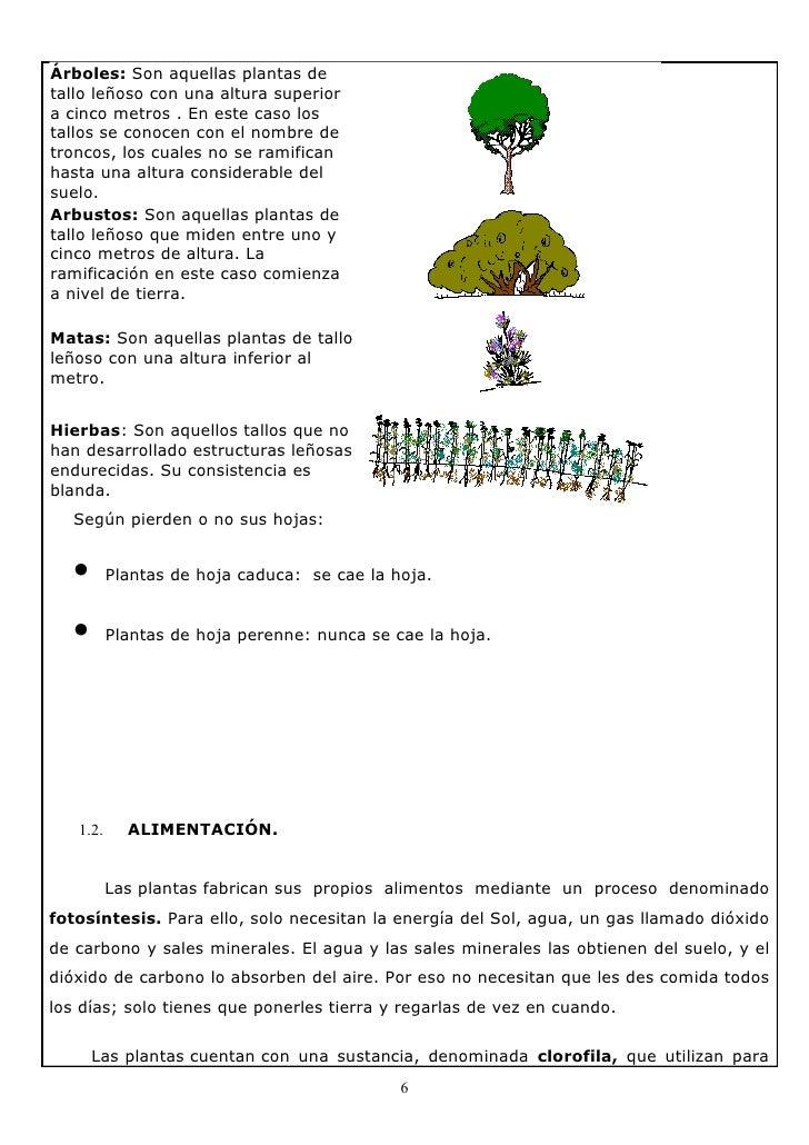 Dossier plantas y hongos for Diferencia entre arboles de hoja caduca y hoja perenne