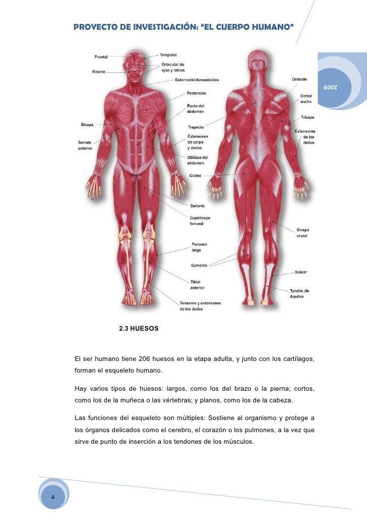 Dossier El Cuerpo Humano