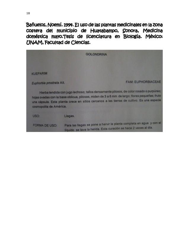 18 Bañuelos, Noemí. 1994. El uso de las plantas medicinales en la zona costera del municipio de Huatabampo, Sonora, Medici...