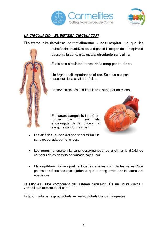 5 LA CIRCULACIÓ – EL SISTEMA CIRCULATORI El sistema circulatori ens permet alimentar - nos i respirar. Ja que les substànc...