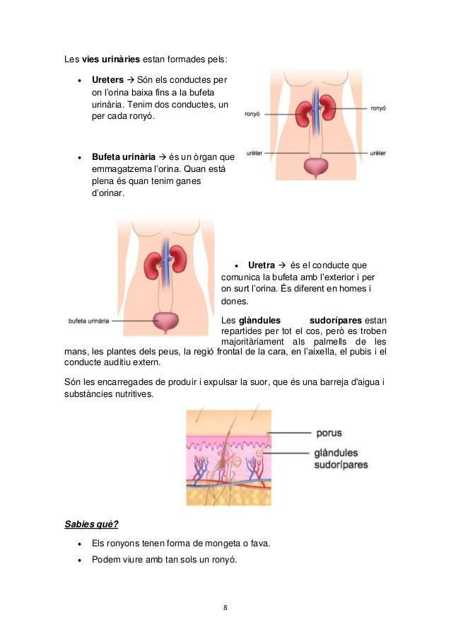 8 Les vies urinàries estan formades pels:  Ureters  Són els conductes per on l'orina baixa fins a la bufeta urinària. Te...