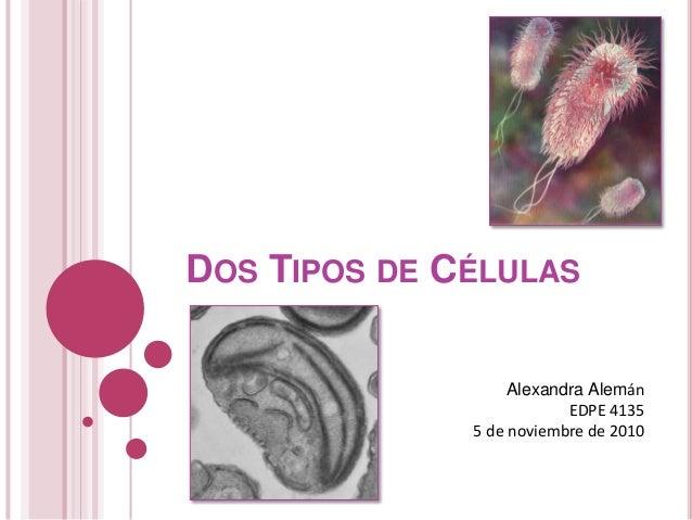 DOS TIPOS DE CÉLULAS Alexandra Alemán EDPE 4135 5 de noviembre de 2010