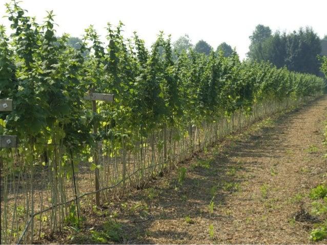 heritage raspberry planting instructions