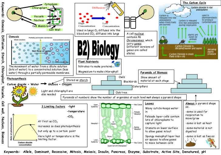 gcse osmosis biology coursework