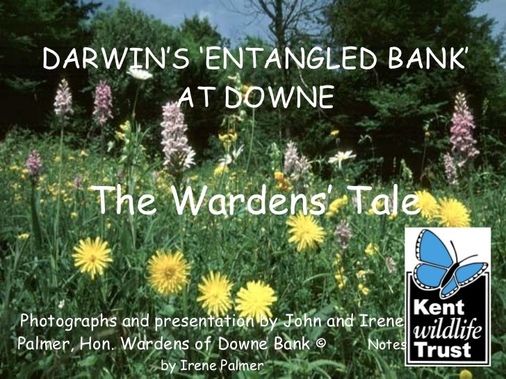 DARWIN'S 'ENTANGLED BANK' AT DOWNE Photographs and presentation by John and Irene Palmer, Hon. Wardens of Downe Bank  ©  N...