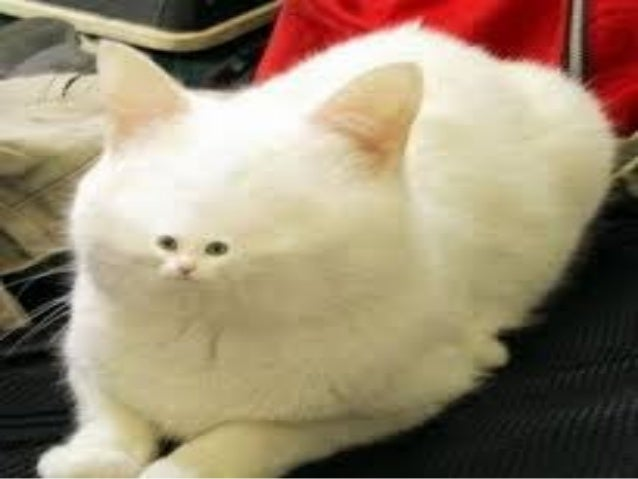 Download funny cat videos