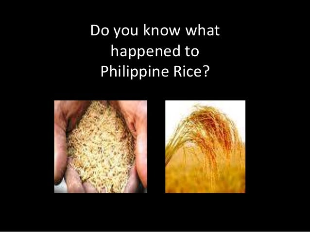 Do you know what  happened to Philippine Rice?