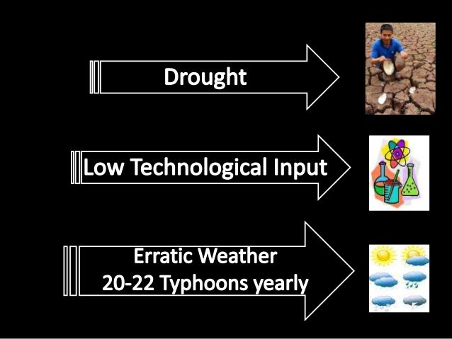 Among with many othersRice CartelManagement of irrigation facilitiesSupport SystemTraining with latest developmentSource: ...