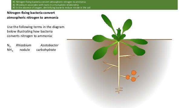 Dp biology option c6 nitrogen phosphorus cycles ahl ccuart Choice Image