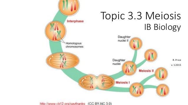 Dp biology topic 3 3 meiosis topic 33 meiosis ib biology r price v ccuart Gallery