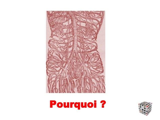 Petite / Grosse Aorte Attention au calibre normal de l'aorte sus-jacente variable en fonction  du sexe (calibre AoAbd plu...
