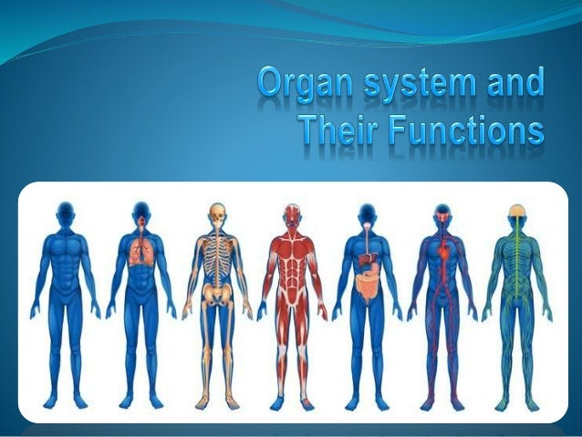 Best Human Muscle Stock Photos Pictures U0026 Royalty Manual Guide