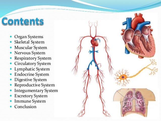 the basic structures and functions of the human body