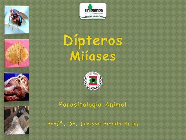 Miíase: é a infestação de órgãos ou tecidos de animais hospedeiros e do homem por estágios larvais de moscas dípteras.  ...