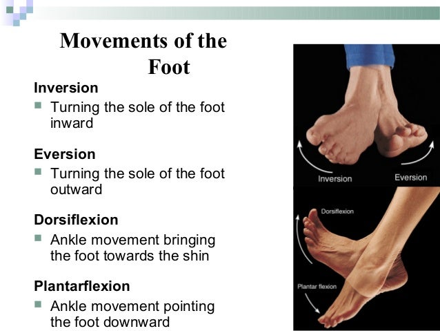 Supination definition anatomy