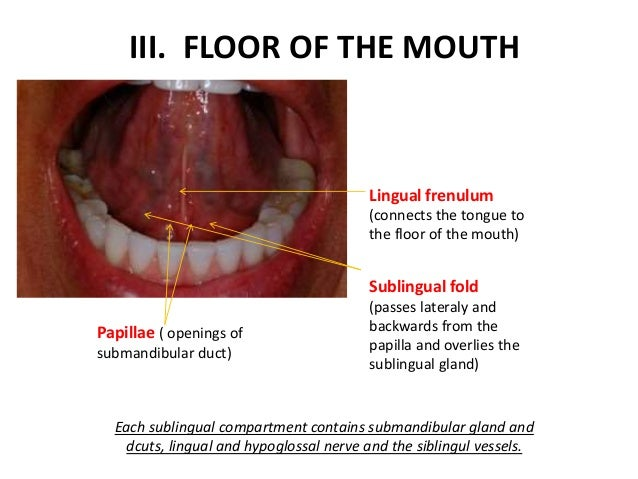 Haddad anatomy of oral cavity for Floor of mouth anatomy