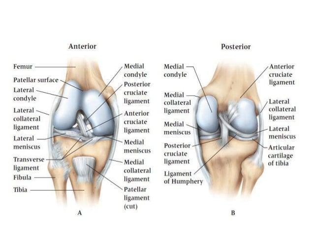 Dr anurag applied anatomy of knee 34 ccuart Choice Image