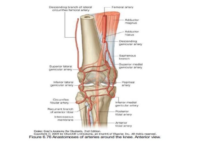 Dr anurag applied anatomy of knee 38 ccuart Gallery