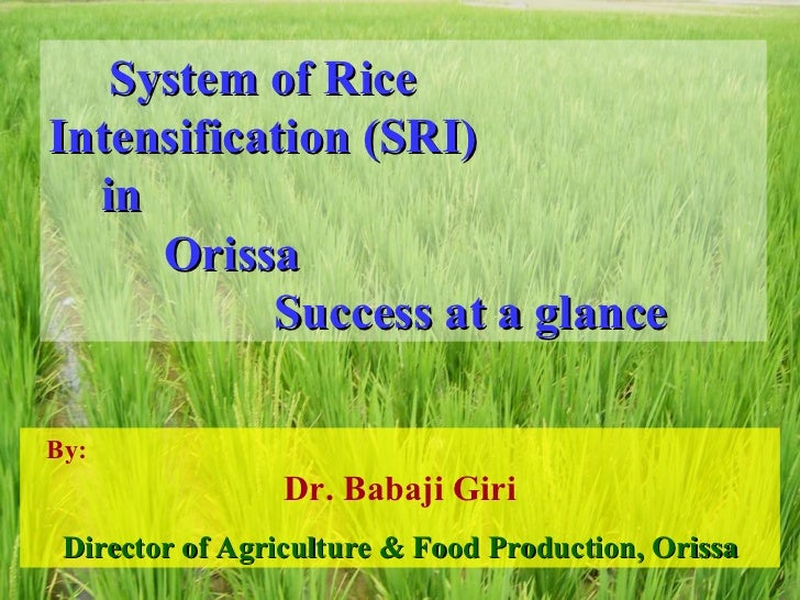 System of Rice  Intensification (SRI)  in  Orissa  Success at a glance By:  Dr. Babaji Giri Director of Agriculture & Food...