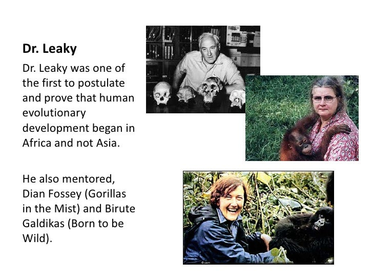 Dr. LeakyDr. Leaky was one ofthe first to postulateand prove that humanevolutionarydevelopment began inAfrica and not Asia...