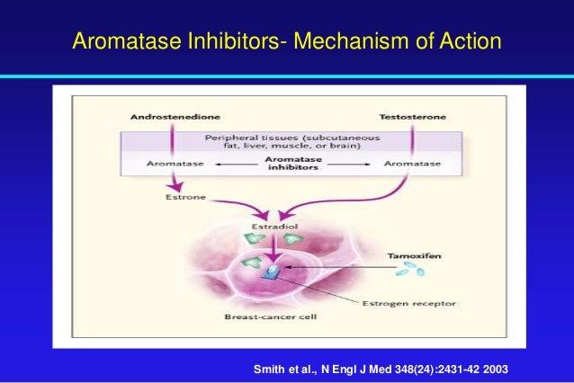 tamoxifen mechanism of action pdf
