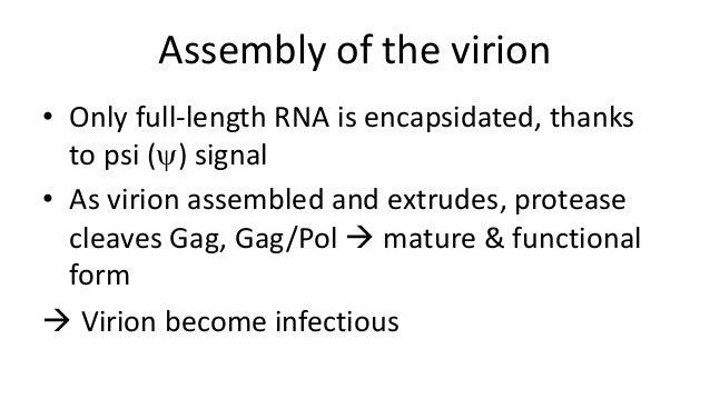 Retroviruses and HIV
