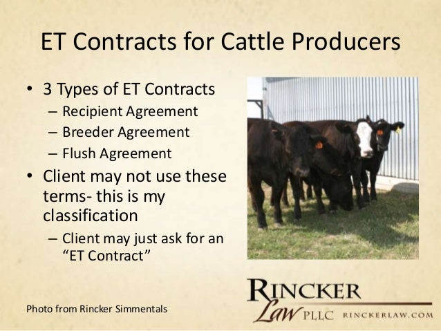 Image Result For Embryo Transfer In Cattlea
