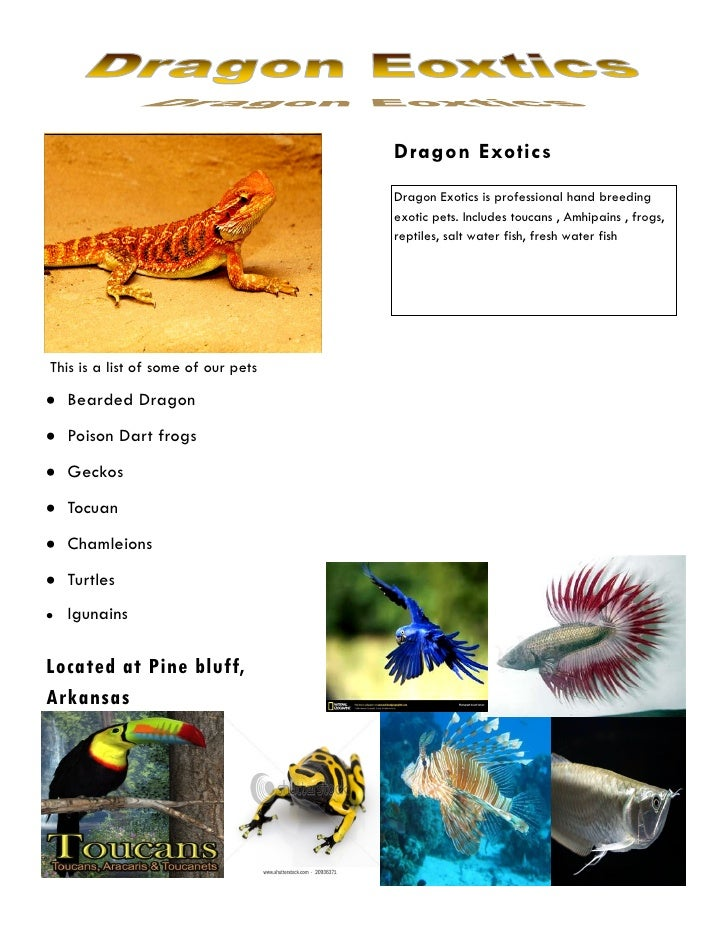 Dragon Exotics                                     Dragon Exotics is professional hand breeding                           ...