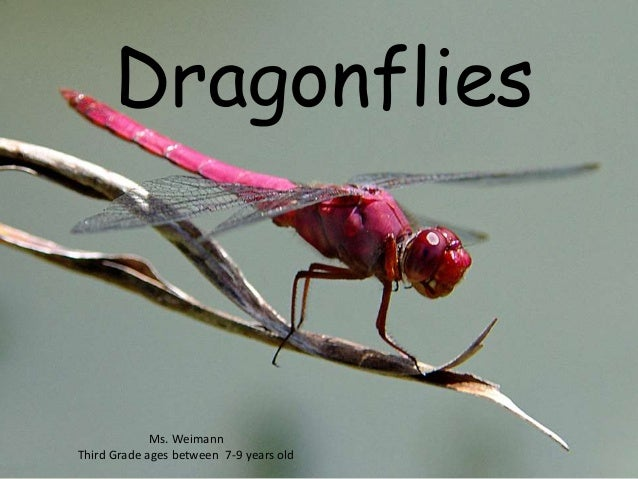 Dragonflies  Ms. Weimann  Third Grade ages between 7-9 years old