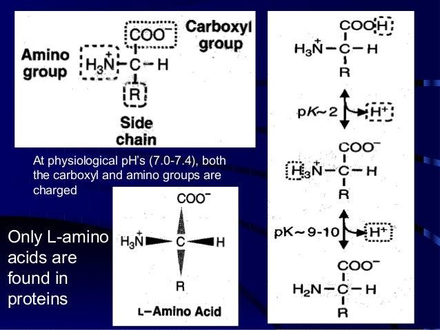 Biomolecules: Amino Acids and Peptides Slide 3