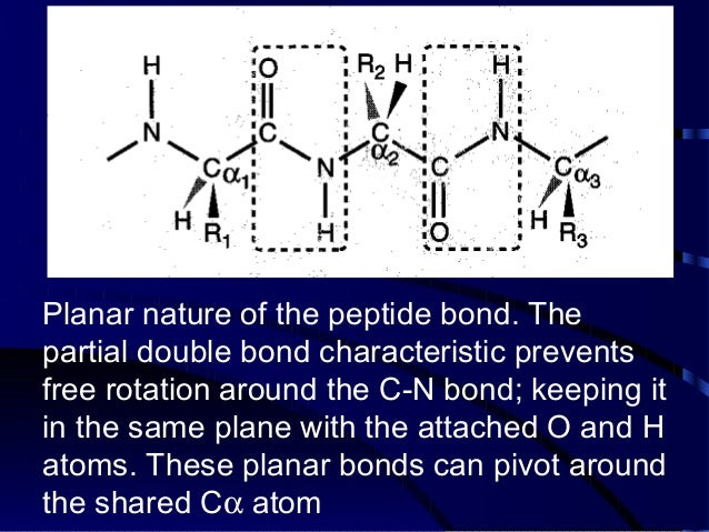 Biomolecules: Peptides and Proteins Slide 3