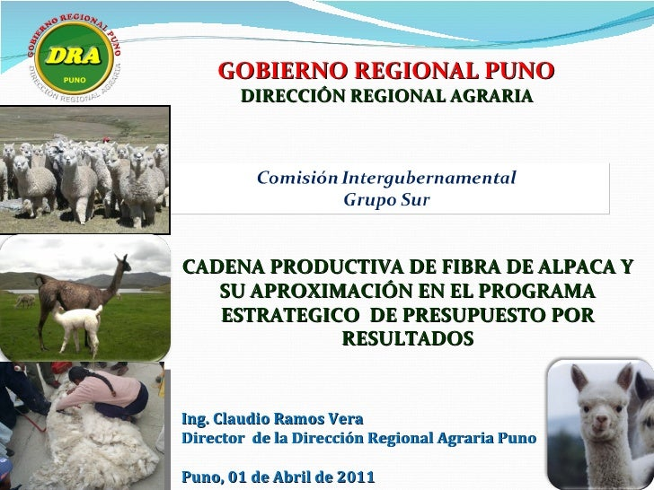 GOBIERNO REGIONAL PUNO       DIRECCIÓN REGIONAL AGRARIACADENA PRODUCTIVA DE FIBRA DE ALPACA Y   SU APROXIMACIÓN EN EL PROG...