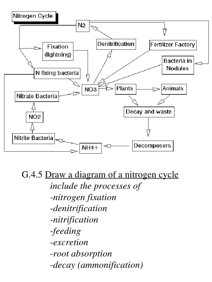 Ib biology draw assessment statements 30 g45 draw a diagram of a nitrogen cycle ccuart Gallery
