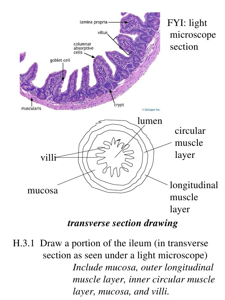 Ib biology draw assessment statements ccuart Image collections