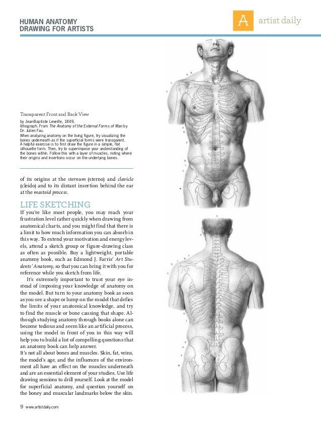 Erfreut Artists That Draw Human Anatomy Bilder - Anatomie Ideen ...