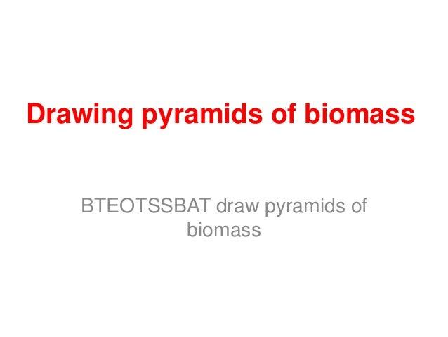 Drawing pyramids of biomass   BTEOTSSBAT draw pyramids of           biomass