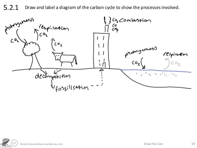 Draw and label a diagram of the carbon cycle diy enthusiasts http sciencevideos wordpress com draw the core 395 2 1 rh slideshare net draw and label a diagram of the carbon cycle draw a clear and well labelled diagram ccuart Choice Image