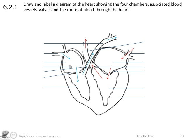 Http www heart diagram with labels new wiring diagram 2018 sciencevideos wordpress com draw the core 516 2 1 heart anatomy diagram to label and heart of color heart diagram without labels on http www heart diagram ccuart Gallery