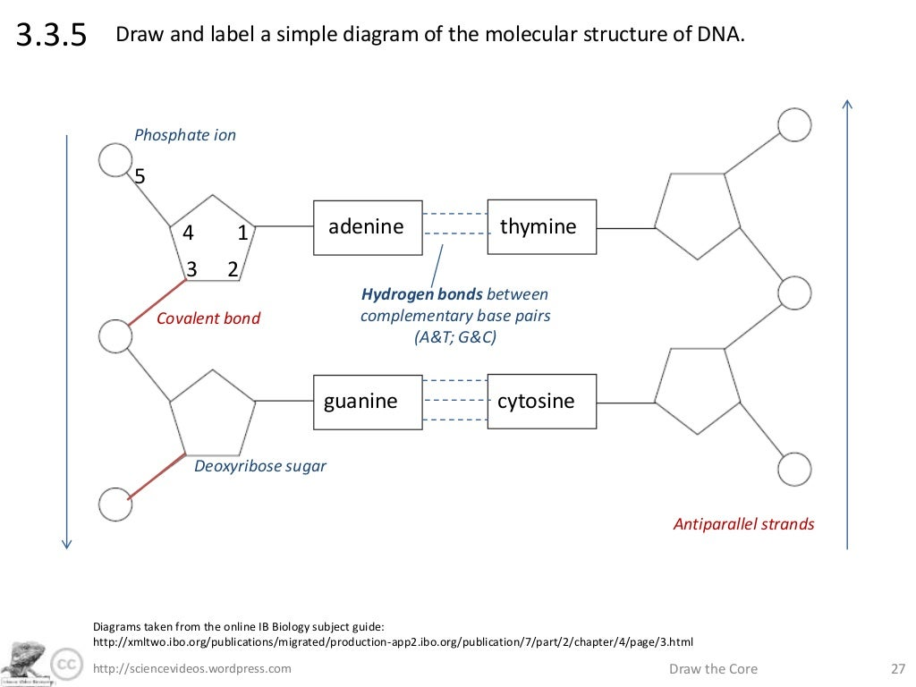 Draw a diagram of a dna molecule block and schematic diagrams http sciencevideos wordpress com draw the core 273 3 5 rh slideshare net dna structure diagram dna double helix labeled diagram ccuart Choice Image