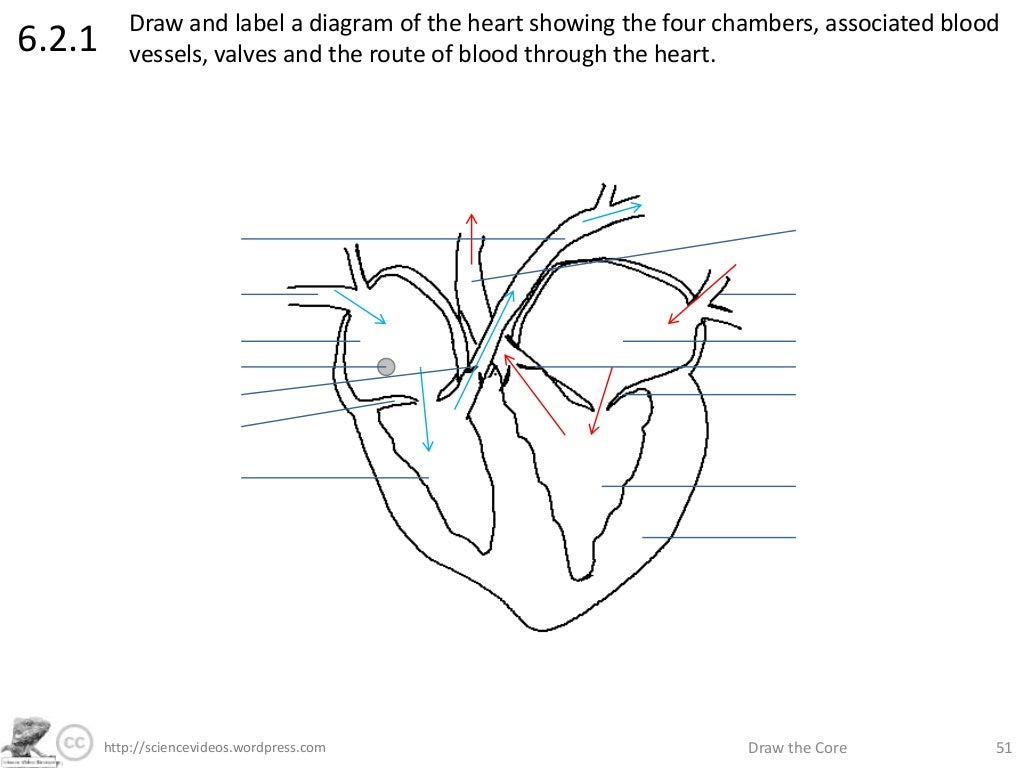 Download Fishbone Diagram Template Powerpoint further 51  ciencevideoswordpress  Draw the Core 51621 besides Ecg Line further Dot And Cross Diagram Questions And Answers as well Diagram Of Digestive System Unlabeled. on unlabeled heart