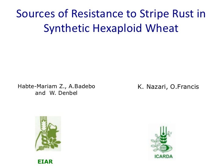 Sources of Resistance to Stripe Rust in Synthetic Hexaploid Wheat<br /> <br />Habte-Mariam Z., A.Badebo and  W. Denbel<br ...