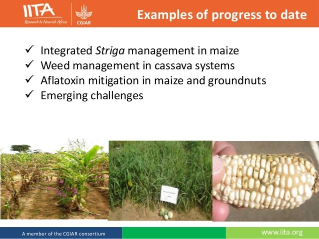 thesis on integrated weed management in cowpea Sowing at wider row spacing, severe infestation of weeds integrated weed management provides effective weed is observed in pigeonpea which results in low grain yield management in pigeonpea [4-6] and cowpea (15.