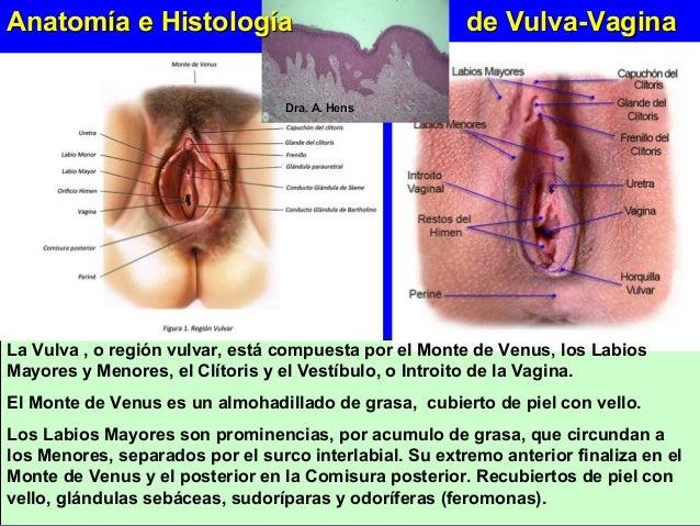 Cambio Vulvares en la menopausia. Rafael Comino
