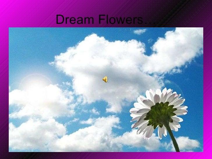 Dream Flowers…