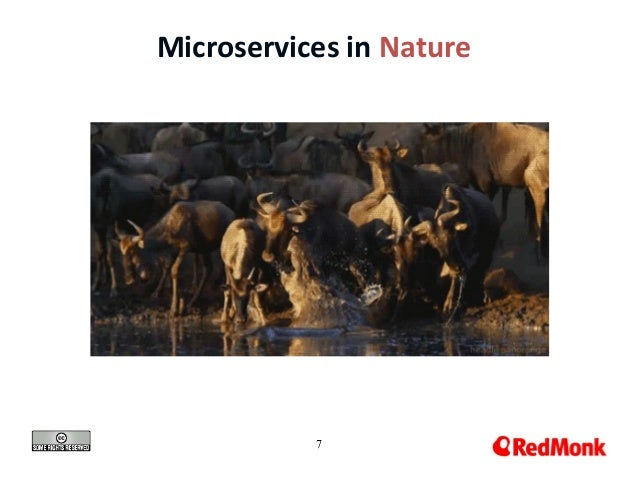 7 Microservices in Nature