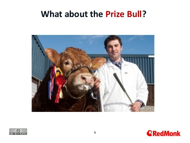 8 What about the Prize Bull?