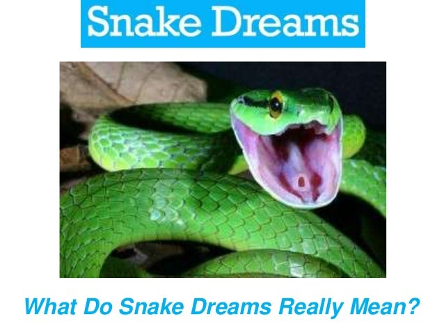 Dreams About Snakes What Do They Mean